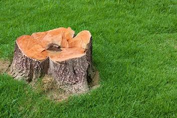 a stump on the ground