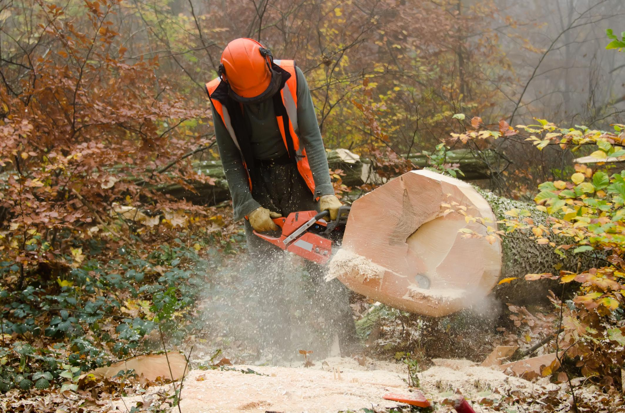 man sawing a log
