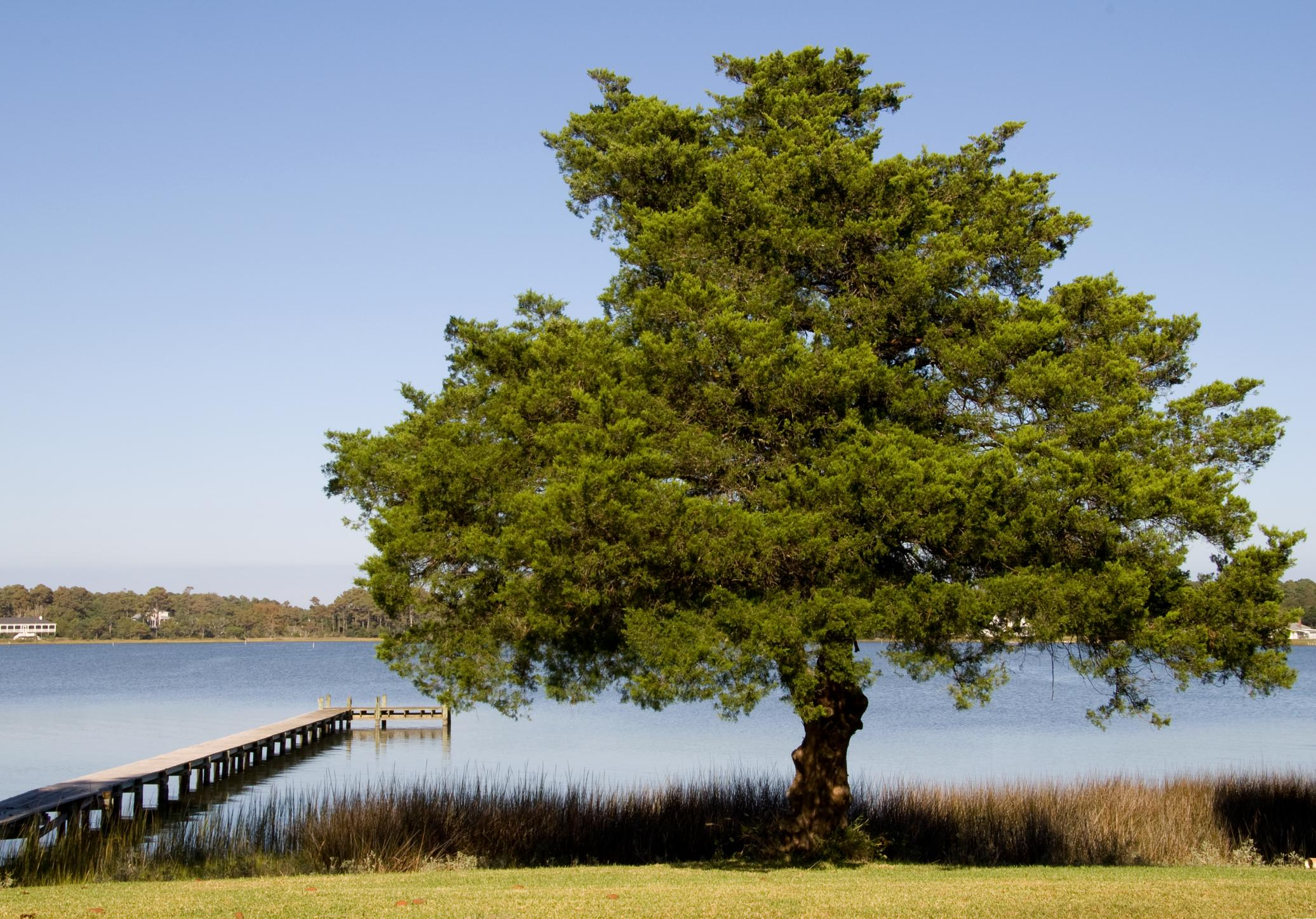 a tree on the lake